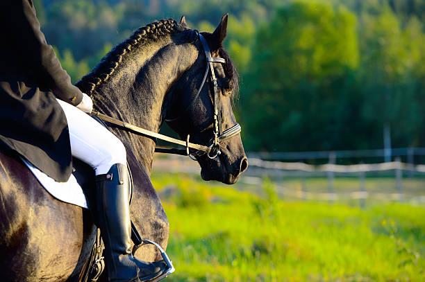 fohlendecke pferd