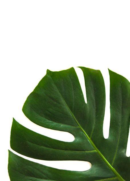 palmen-angebot